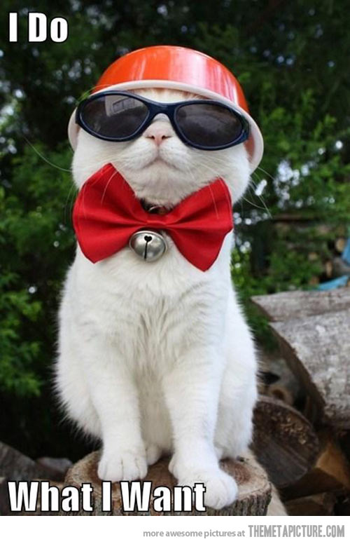 Cat Wearing A Bow Tie;